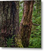 Forest At Camp Creek, Olympic National Forest, Washington, 2016 Metal Print