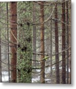 Forest At Winter Metal Print