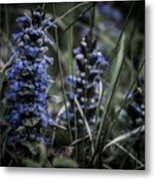 Forest Blues Metal Print