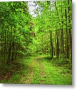 Forest Byway Metal Print