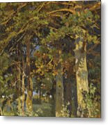 Forest Clearing Metal Print