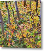 Forest Colors Metal Print
