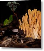 Forest Coral Fungi Metal Print