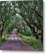 Forest Corridor Metal Print