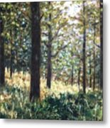 Forest- County Wicklow - Ireland Metal Print