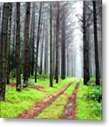 Forest Drive Metal Print