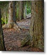 Forest Feet Metal Print