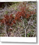 Forest Fire C Metal Print