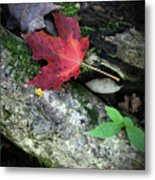 Forest Floor In Autumn Metal Print