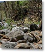Forest Floor Near Oak Creek Metal Print