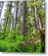 Forest Floor Of Hoh Rain Forest Metal Print
