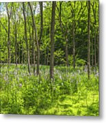 Forest Floor Dame's Rocket Metal Print