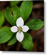Forest Flower Metal Print