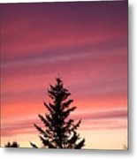 Forest Grove Sunset Metal Print