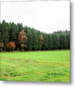 Forest In Bavaria Metal Print