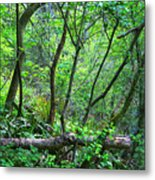 Forest In Hdr Metal Print