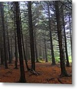 Forest Metal Print by Judy  Waller