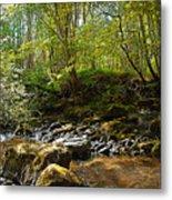 Forest Landscape Metal Print