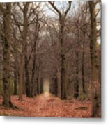 Forest Lane Near Maarsbergen Metal Print