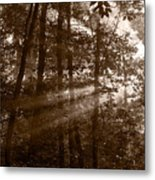 Forest Mist B And W Metal Print
