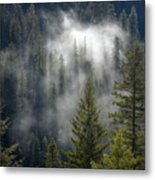Forest Mystery Metal Print