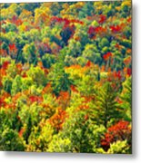 Forest Of Color Metal Print