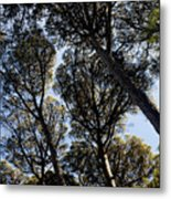 Forest Of Sintra Metal Print