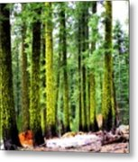 Forest Of The Crossroads Metal Print