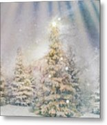Forest Of Trees In The Light Metal Print