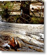Forest Pals Metal Print