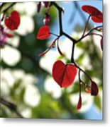 Forest Pansy Redbud Leaves In Spring Metal Print