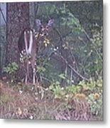 Forest Peek A Boo Metal Print