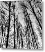 Forest Pastel  Metal Print
