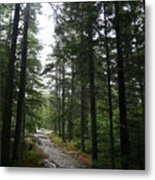 Forest Path At Grafton Notch State Park Metal Print
