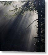 Forest Rays Metal Print