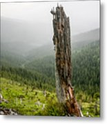 Forest Remnant Metal Print