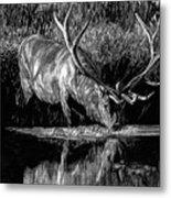 Forest Royal Bull Elk Metal Print