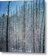 Forest Secrets  7917 Metal Print