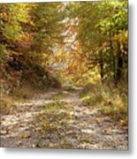 Forest Stone Path Metal Print