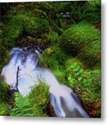 Forest Stream. Benmore Botanic Garden Metal Print