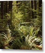 Forest Sunlight And Shadows  Metal Print