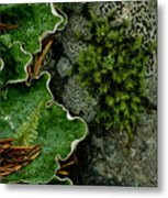 Forest Textures Metal Print