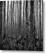 Forest Thru The Trees Metal Print