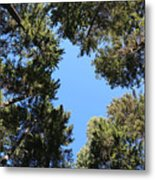 Forest Treetops Metal Print