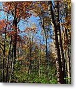 Forest Veteran Metal Print