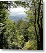 Forest View From Mt Tamalpais Metal Print