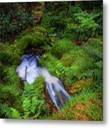 Forest  Water Stream. Benmore Botanic Garden Metal Print