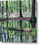 Forest Wetland Metal Print