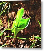 Forest Wildlife Nature Metal Print