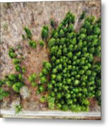 Forest With Green Trees From Above Metal Print